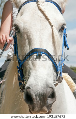 Close up of a grey horse wearing a bridle - stock photo