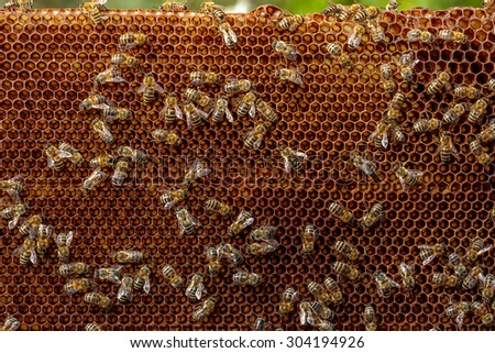 Close up of a honey bee frame from a hive with Colony Collapse Disorder covered with a few bees - stock photo