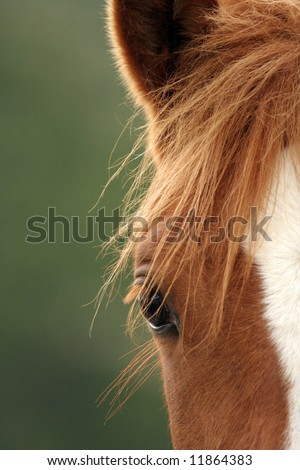 Close up of a horse - stock photo