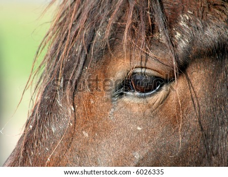 close-up of a horse's head - stock photo