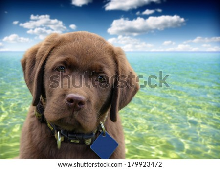 close up of a labrador retriever with ocean and blue sky as background - stock photo
