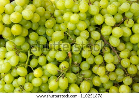 Close up of a large cluster of green grapes