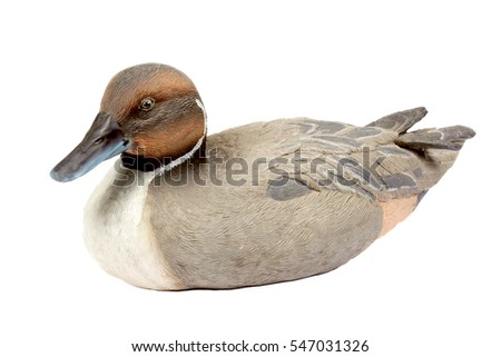 Close up of a mallard duck table ornament on white