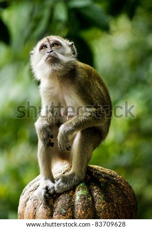 close up of a monkey - stock photo