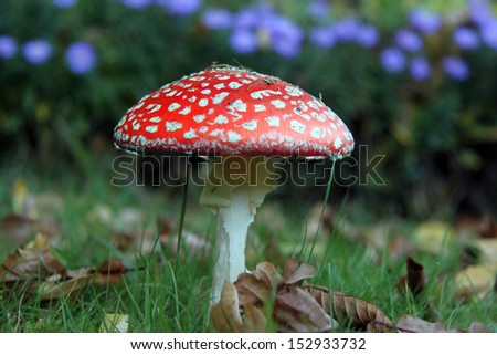 close up of a mushroom