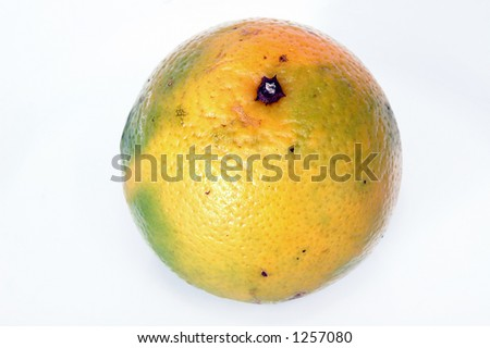 Close-up of a Orange