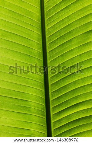 Close up of a palm leaf. - stock photo