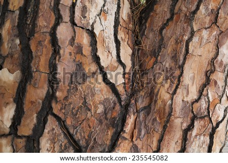 Close up of a pine trunk