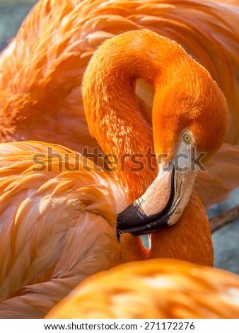 close up of a pink flamingo - stock photo