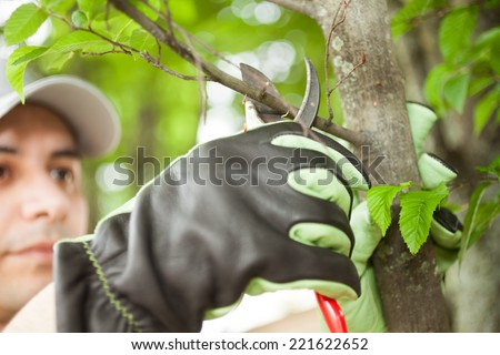 Close-up of a professional gardener pruning a tree - stock photo