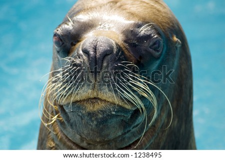 Close-up of a seal looking inquisitive. - stock photo