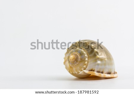 Close up of a seashell on white background. - stock photo