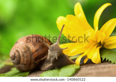 Close up of a Snail in a garden. - stock photo