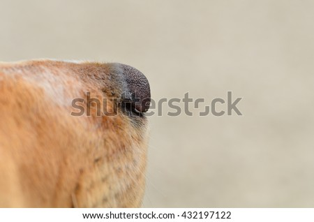 Close up of a spaniels nose with room for your text