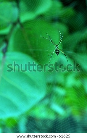 Close-up of a spider. - stock photo