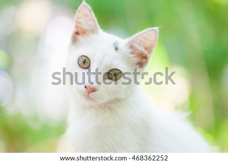 Close-up of a street cat wild cat domestic animal