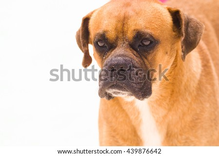 Close up of a street dog - stock photo