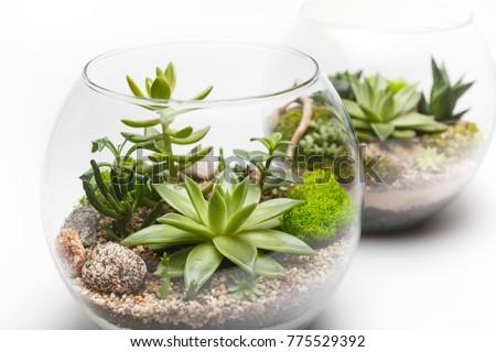 Closeup Succulent Arrangement Glass Vase Terrarium Stock Photo Edit