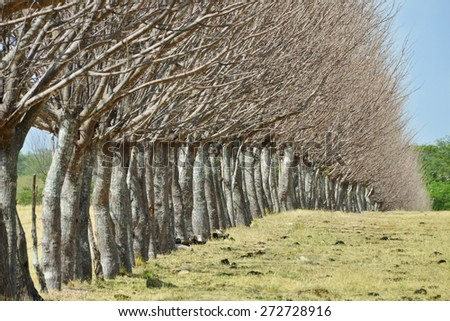 Close up of a tree fence in a pasture field in the country with a blue sky - stock photo