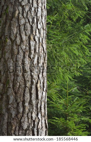 Close-up of a tree trunk in a forest - stock photo