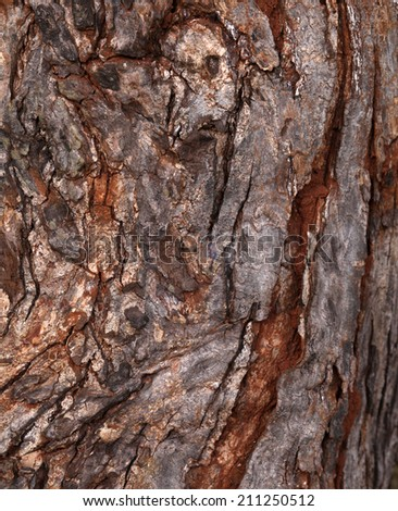 Close up of a tree trunk texture