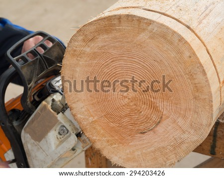 Close up of  a tree trunk which is getting sliced with a chainsaw  - stock photo