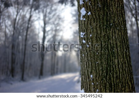 Close up of a tree trunk with blurred snow landscape in winter