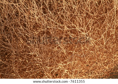 close up of a tumble weed aka Salsola Saltwort or