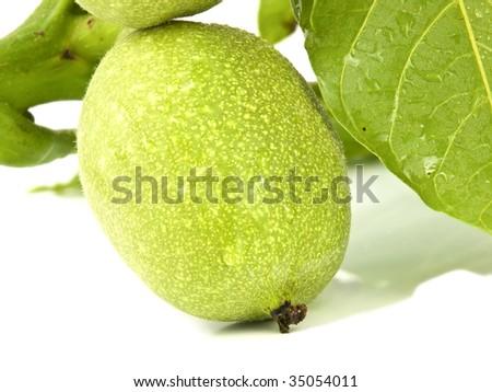 Close up of a unripe walnut on white background - stock photo