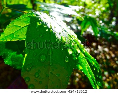 Close up of a wet green leaf reflecting sunlight - stock photo