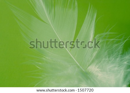 Close-up of a white feather on a limegreen background. Macro photograph: shallow depth of field! - stock photo