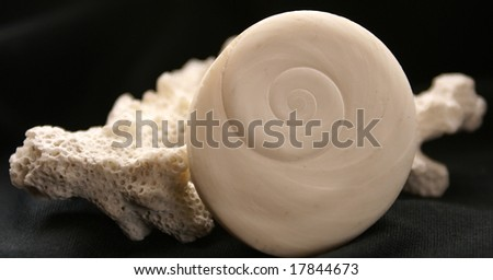 Close-up of a worn sea shell  and coral isolated over a black background. - stock photo