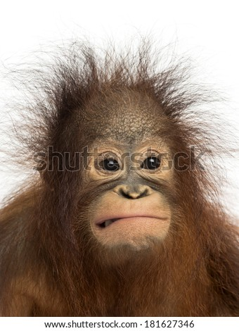 Monkey Faces Stock Images Royalty Free Images Amp Vectors