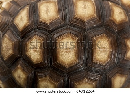 Close-up of African Spurred Tortoise shell, Geochelone sulcata, 1 year old - stock photo