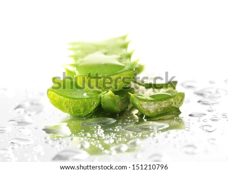 Close up of aloe leaves with drops - stock photo