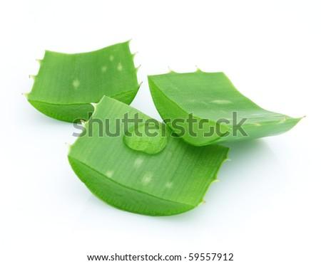 Close-up of aloe vera - stock photo