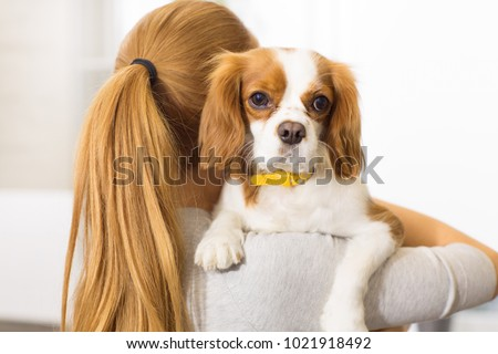 Simple Cavalier Canine Adorable Dog - stock-photo-close-up-of-an-adorable-fluffy-puppy-cavalier-king-charles-spanier-in-the-hands-of-his-female-owner-1021918492  Pictures_568060  .jpg