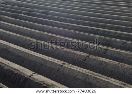 Close-up of an asparagus field in the Netherlands - stock photo