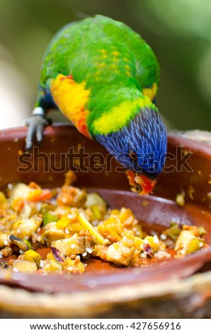 Close up of an eating parrot. - stock photo