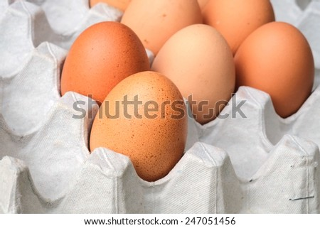 Close up of an eggs - stock photo