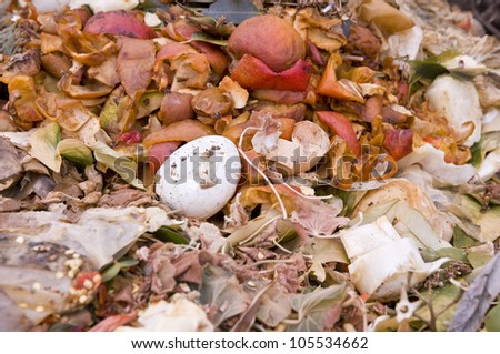 Close up of an Eggshell and Apple Peels in the Kitchen Waste - stock photo