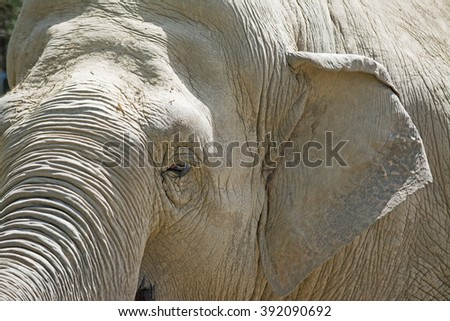 close up of an elephant head - stock photo