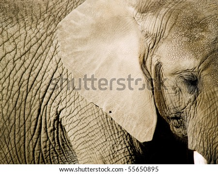 Close up of an elephant with focus on the eye - stock photo
