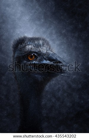 Close up of an emu in the rains. (Dromaius novaehollandiae) - stock photo