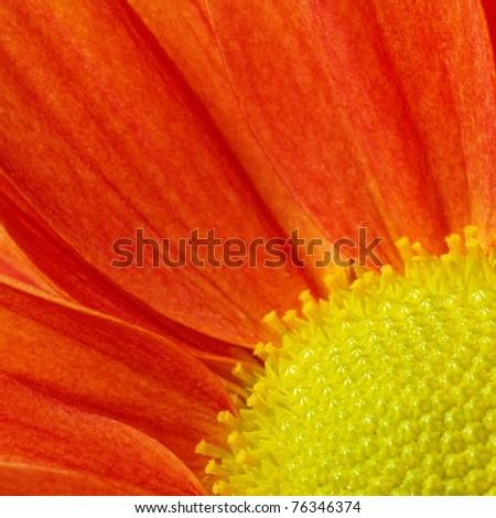 Close-up of an orange flower - stock photo
