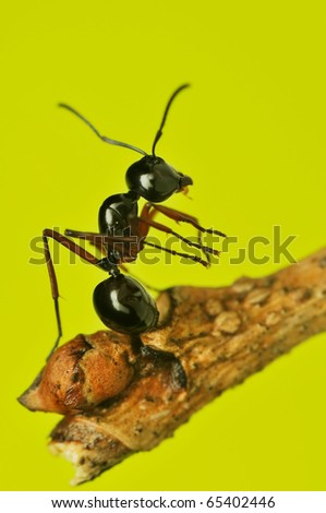 Close up of Ant - stock photo
