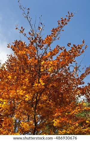 Close up of autumn tree with red, orange and yellow colored leaves.