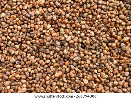 Close up of baked corn grains. Whole background - stock photo