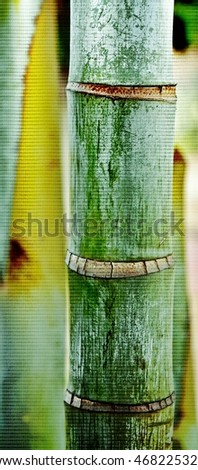 Close up of Bamboo Palm Tree stem