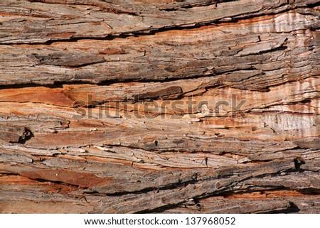 close up of bark of tree - stock photo